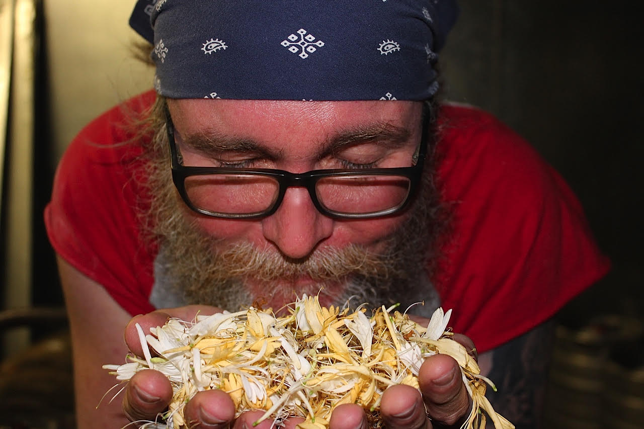 Jeff Adams from Saw Works smells the honeysuckle before adding to the brew.