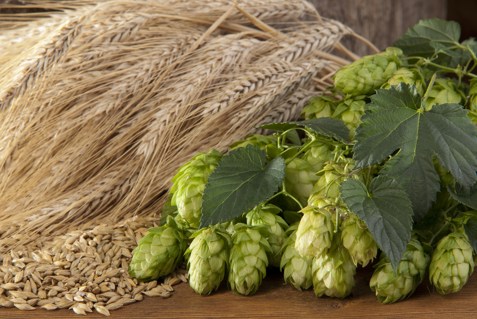 A still life of hops, barley and malt for Brewschool