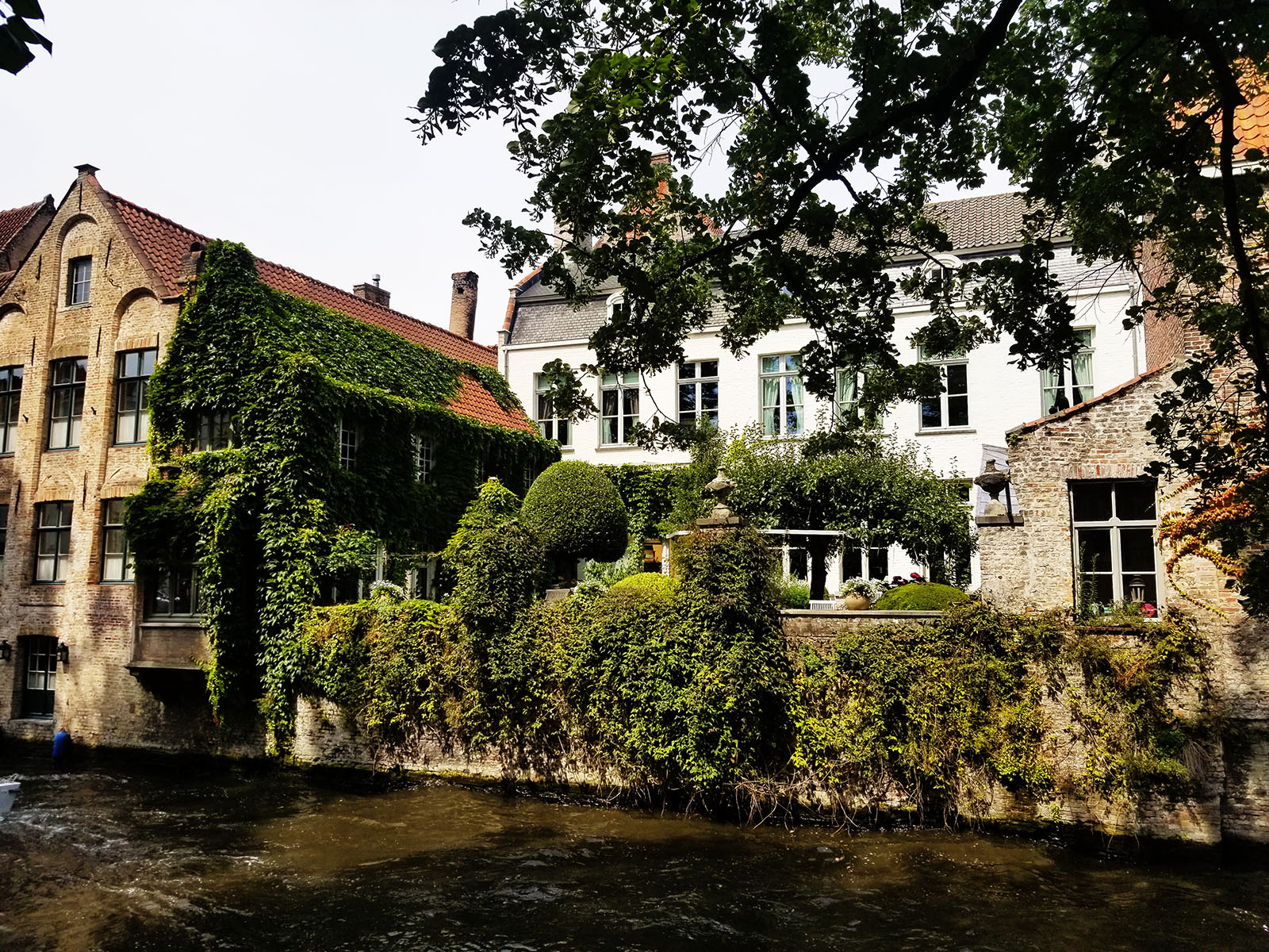 Bruges canal with grasse and vines