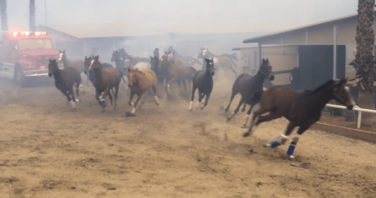 Horses running in panic as california wildfire gets close.